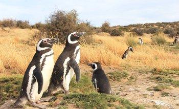 """Los pingüinos varados """"llegan en muy malas condiciones, porque no han logrado comer lo suficiente y por eso van a la playa a morir"""", dijo a la BBC el Dr. Flavio Quintana."""