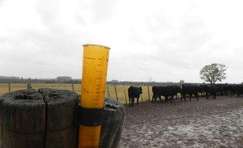 Imagen Las lluvias llegaron a tiempo para buena parte del campo