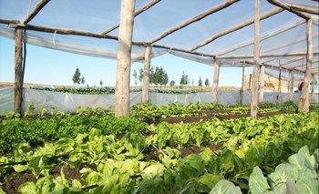 La producción en áreas cubiertas permite que el abasto se cumpla con menores dificultades