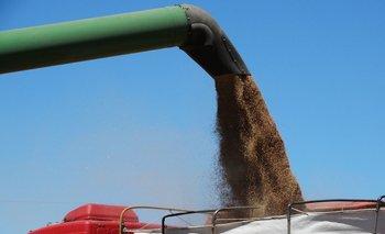 Las exportaciones de trigo se ubicaron en U$S 21 millones, siendo esta cifra más del doble de lo exportado en febrero de 2020.