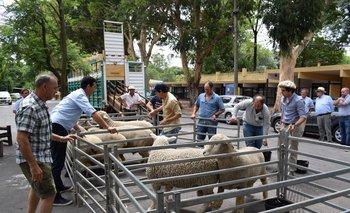 La presentación de los reproductores importados se realizó en la Rural del Prado.