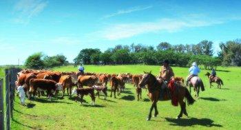 El campo, una buena opción para las vacaciones