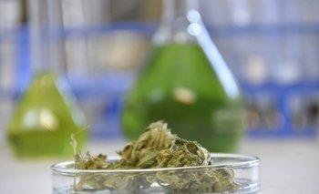 Colombia autoriza uso industrial del cannabis