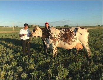 La vaca, de seis lactancias, de La Prenda Chica, de Chiarino.