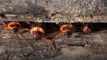 Las cucarachas y las moscas caseras pueden proliferar en los próximos años.