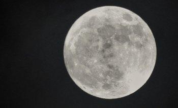 Por Qué Los Lobos Aúllan A La Luna