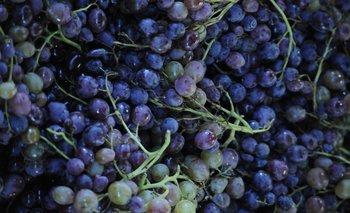 Hoy la uva tiene un valor de $ 39 el kilo.
