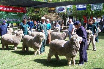 Expectativa por apreciar la habitual calidad de la muestra de la Sociedad Rural de Durazno.