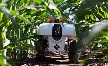 Un campo dedicado a la investigación en Farmer City, Illinois.