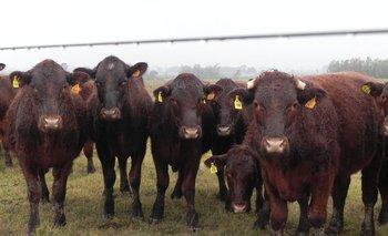 Hay buena demanda por ganados bien terminados.
