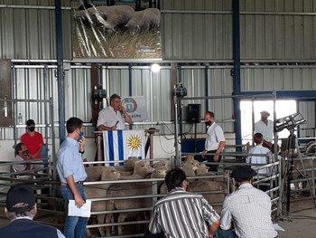 José Pedro Aicardi, director de MegaAgro, rematando en La Pastoral.