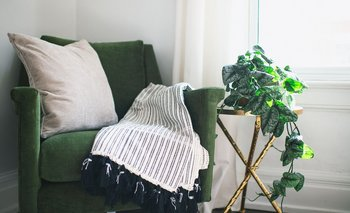 Las plantas mejoran cualquier espacio del hogar