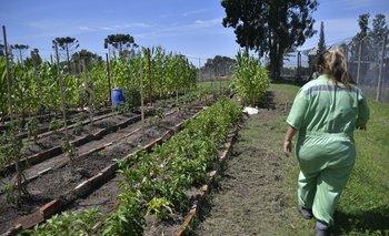 20% del tiempo de las mujeres en Uruguay se destinó a trabajo no remunerado en el hogar y en los cuidados.