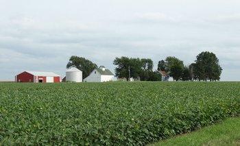 Chacra con soja en Illinois, Estados Unidos.