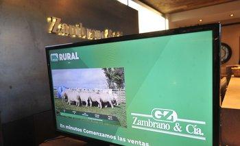 Jornada de ventas ovinas en Zambrano & Cía