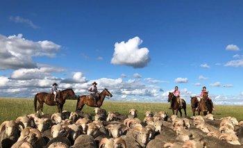 Producción de ovinos en campos de Uruguay.