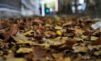 Hojas de plátano caídas en otoño