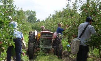 Hay buena demanda y precios estabilizados para las frutas y verduras.