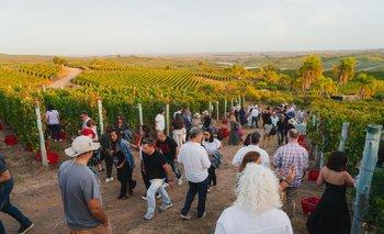 Bodega Garzón, elegida entre las cinco mejores para visitar en el mundo