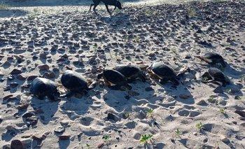 Algunos de los ejemplares encontrados en Playa Verde.