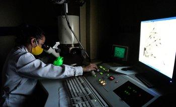 Una investigadora uruguaya trabajando en la Facultad de Ciencias.