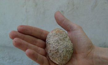 Imagen del fósil encontrado en Colonia.