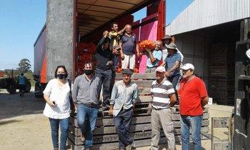 Ya partieron dos camiones con cebolla uruguaya hacia Brasil.