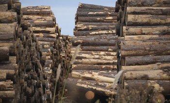 Lamadera de pino es provista por varios productores del sector forestal