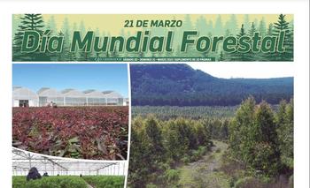 21 de marzo es el Día Mundial Forestal.