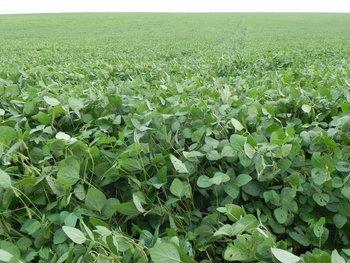 El foco se pondrá en los cultivos de soja, informó el subsecretario del MGAP, Juan Ignacio Buffa.