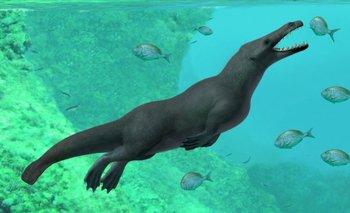 La recién descubierta ballena vivió hace aproximadamente 43 millones de años