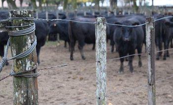 El campo argentino vuelve a enfrentarse con el gobierno.