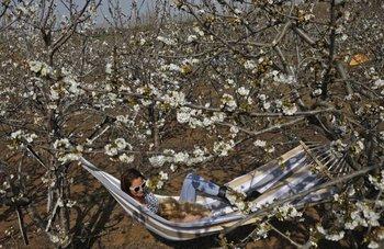 Una mujer israelí acostada sobre una hamaca paraguaya en una granja