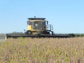 El agro tuvo una expansión superior al 10% en la comparación interanual.