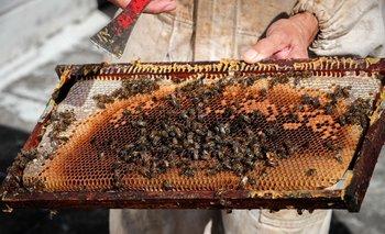 Las abejas tienen una mortandad del 27%.