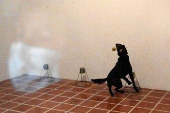 El perro Diamond participa en un entrenamiento para detectar el covid-19 en el Aeropuerto Internacional de San Oscar Romero