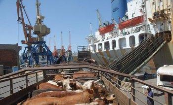 Una actividad intensa esta año en el puerto de Montevideo, exportaciones de ganado en pie.
