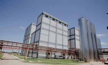Está ingresando cada vez más leche a las plantas industriales.