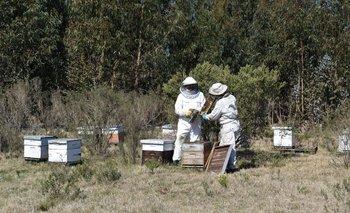 Muchos apicultores en otoño trasladan colmenas a zonas forestadas.