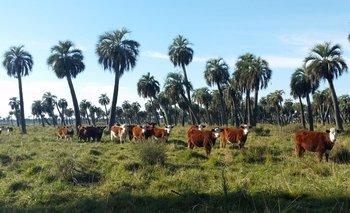 La no regeneración de los palmares se debe principalmente al sobrepastoreo.