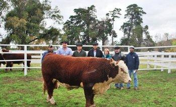 El toro Copa fue para la cabaña Valle del Laurel, de Lavalleja