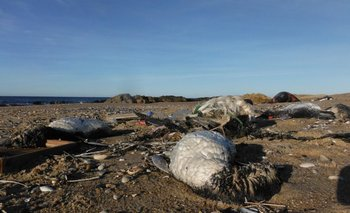 Animales muertos en la costa de José Ignacio