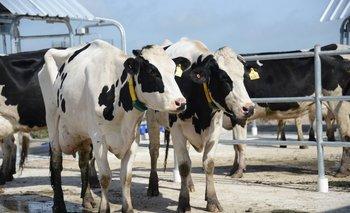 Tamberos aluden a un incremento constante en diversos insumos de uso en los sistemas de producción lechera.