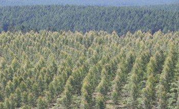 TreeBuddy es la aplicación finlandesa que busca aportar a la reforestación.
