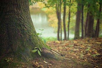 """Sounds of the Forest es un """"mapa sonoro"""" que permite escuchar los espacios naturales de diversos lugares del mundo"""