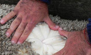 Respecto a fines de la zafra pasada las lanas finas fueron las que más subieron sus valores.