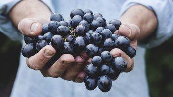 Se produjeron casi 100 millones de kilos de uva.