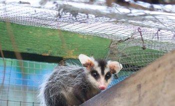 Uno de los animales rescatado por Socobioma
