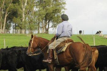 Producción ganadera en campos de Uruguay.