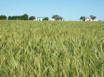 """El llamado está dirigido a los """"aglutinadores"""", como por ejemplo cooperativas agrarias, organizaciones de productores o empresas financiadoras de insumos."""